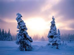 Зимняя программа
